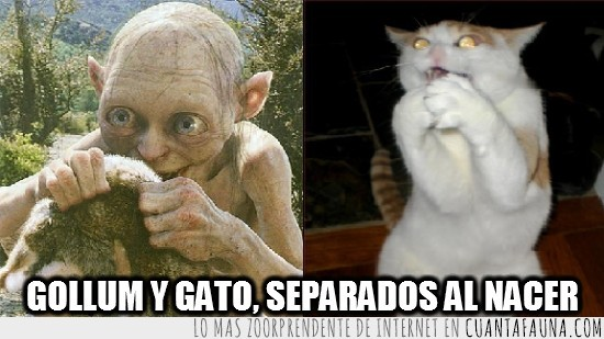 Cuanta Fauna Gollum Y Gato