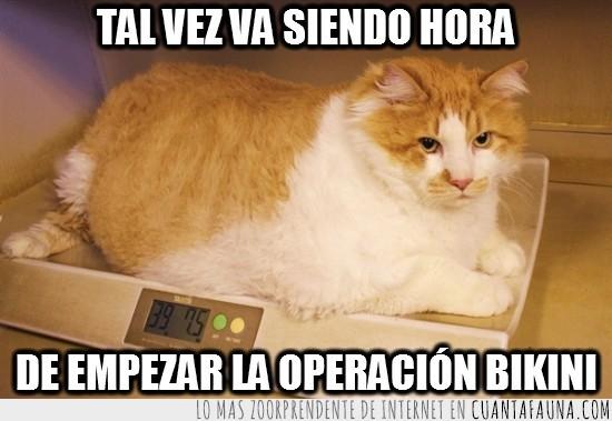 bascula,Garfield,Gato,gordo,obeso,operacion bikini