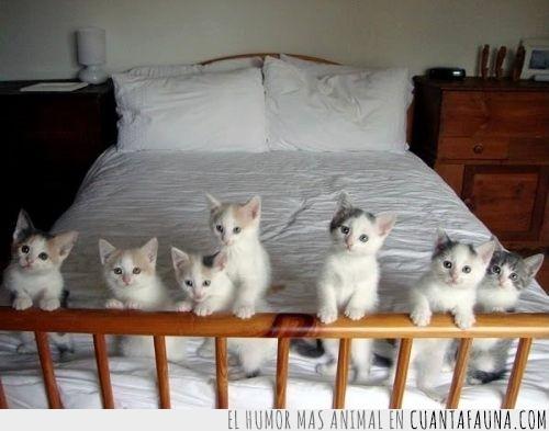 cachorros,cama recien hecha,dormir,ejercito,gatitos,gatos,manada