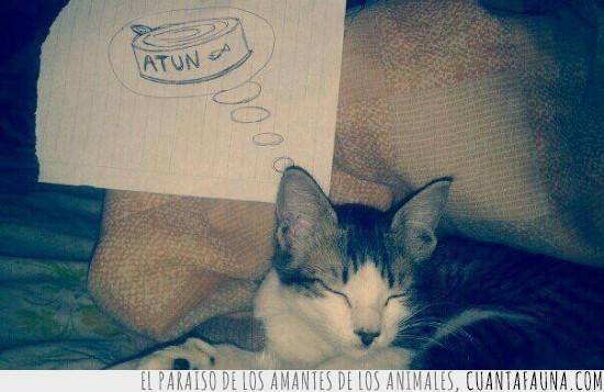 atún,dibujo,dormir,gato,pensamiento,soñar,sueño