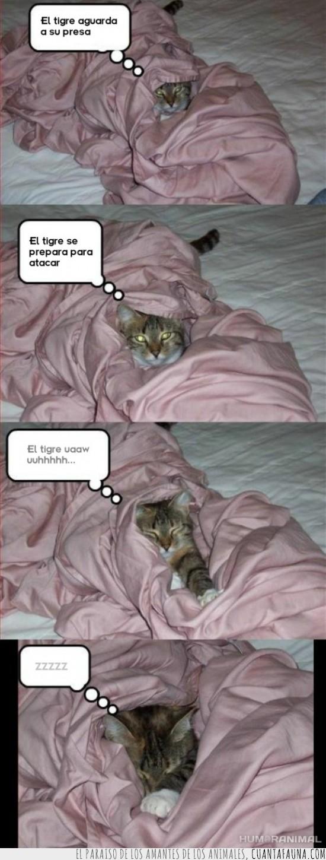 dormirse,gato,presa,sobado,tigre,zzzzz