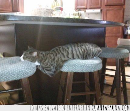 acostado,comodidad,cómodo,gato,medio cuerpo colgando,taburetes