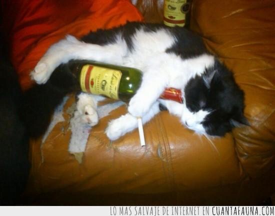borracho,cigarro,dormir,festival,fiesta,sofa,vino