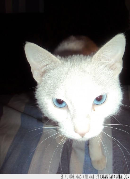 apagar,azules,hipnotizante,luz,movil,ojos