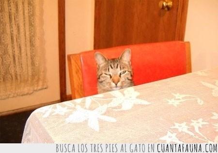 gato,mañana,mesa,recien levantado,sueño,vaya cara