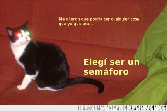 gato,luces,ojos rojos,ojos verdes,semáforo
