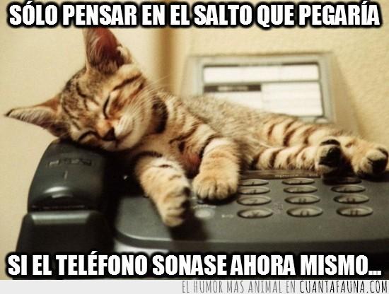 dormir,encima,gato,risa,sonar,telefono