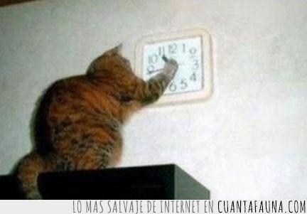 gatos,horarios,manipular,razon,reloj,tocar