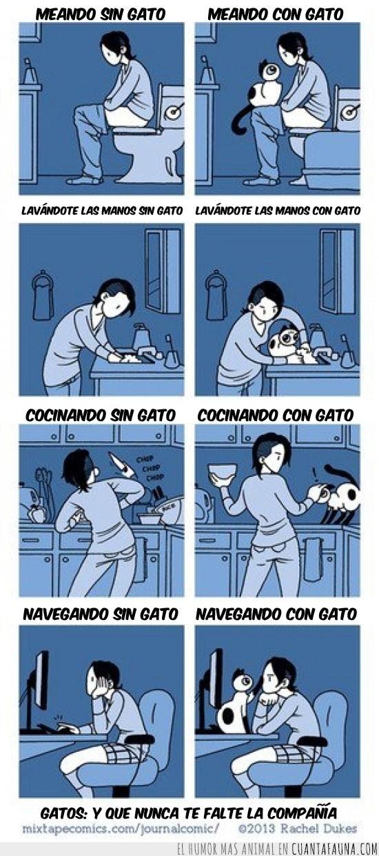 comida,compañia,con gato,gato,lavabo,manos,meando,navegar,sin gato