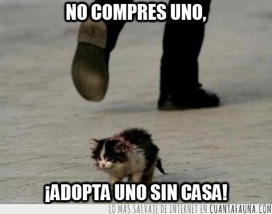 adoptar,gato abandonado,no compres uno