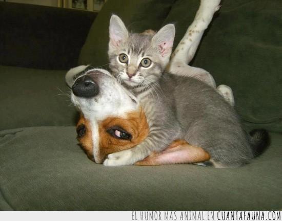 cansino,gatito,no dejar dormir,paciencia,perro,sofa