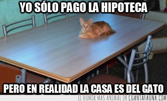 casa,dueño,gato,hipoteca,mesa,pagar,tumbado