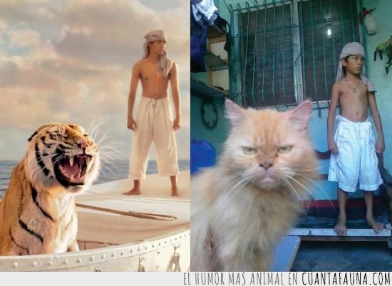 gato,imitación,la vida de pi,misifú,rugir,tigre