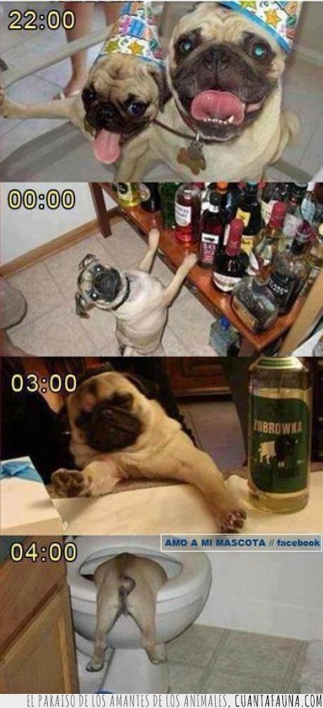 beber,cerveza,fiesta,Perro,resaca,vomitar