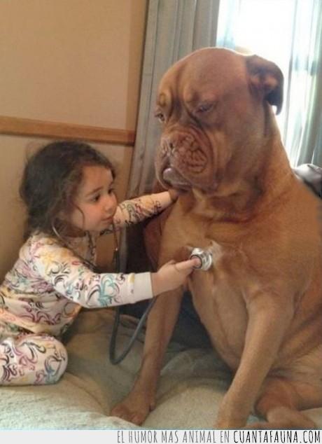 cama,doctor,estetoscopio,medico,niña,paciencia,perro,revisar