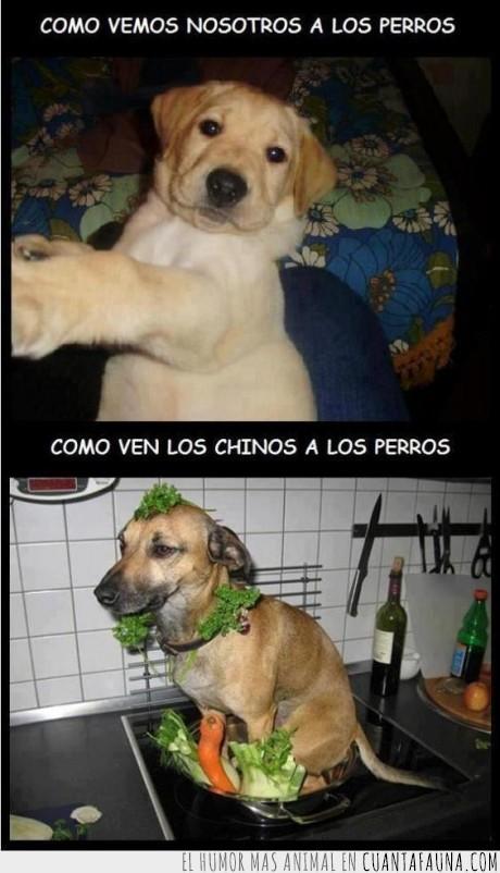 brocoli,chino,comida,perro