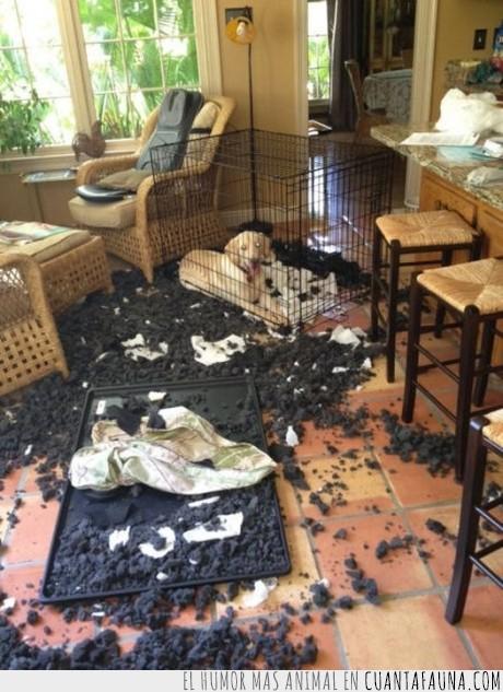 destrozar,destrozo,encerrar,jaula,negro,perro,romper