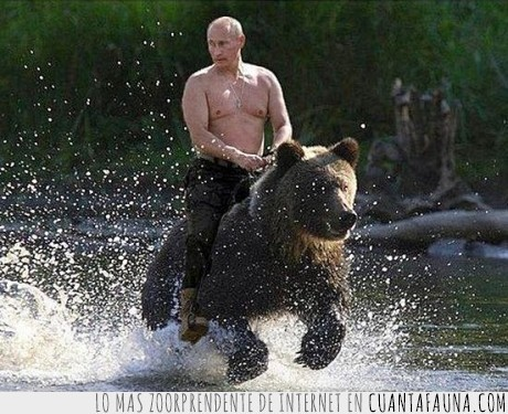 encima,es fake esta claro,mola,montar,Oso,Putin,rio,Rusia,sobre