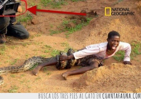camara,fail,genius,national geographic,niño,serpiente