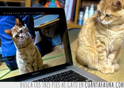 espejo,foto,gato,internet,ordenador,portatil