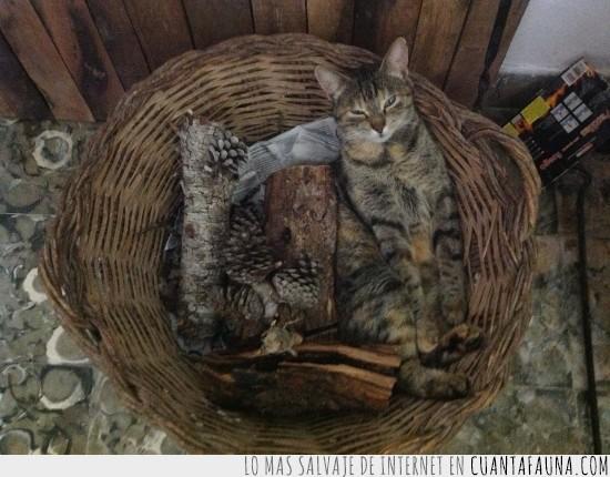 cesto,Gato,leña,madera,troncos
