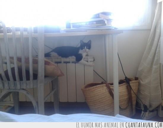 calefacción,caliente,gato,habitación,radiador