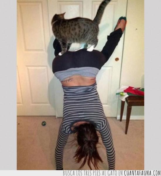 chica,ejercicio,gato,pino,posición