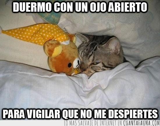 amenaza,cama,dormir,ojo abierto,oso