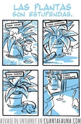 3929 - Las plantas son estupendas