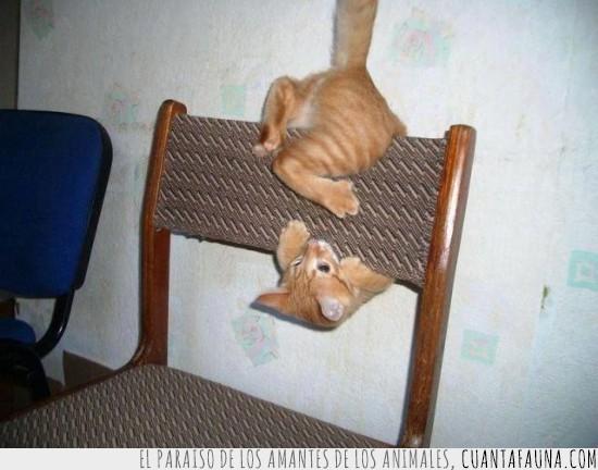 equilibrio,equilibrista,gato,respaldo,silla