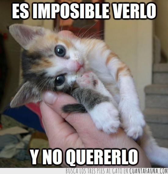 abrazo,adorable,gato,mono,ojos,tierno