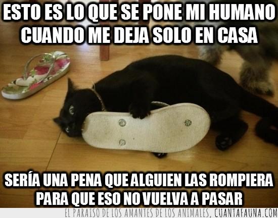 chancla,gato,morder,negro,sandalia