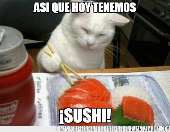 comida,comiendo,gato,japon,palillos chinos,pescado crudo,sushi