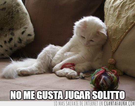 blanco,gato,jugar,lana,solo,triste
