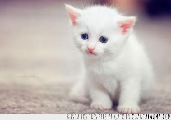 blanco,gato,heterotropia,preocupado
