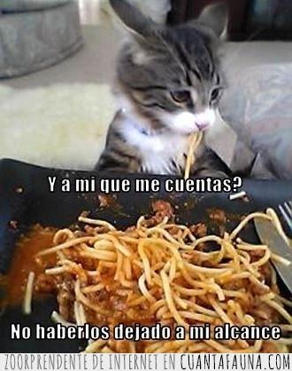 descaro,espaguettis,fideos,robo