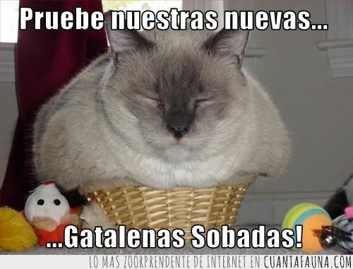 catffins,gatalenas sobadas,magdalena,muffin,sobado