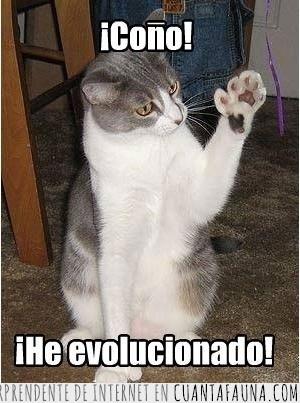 dedos,Evolución,gato,patas,pulgares