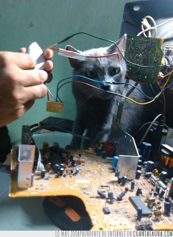 cables,circuito,electricista,gata,gato,placa electronica