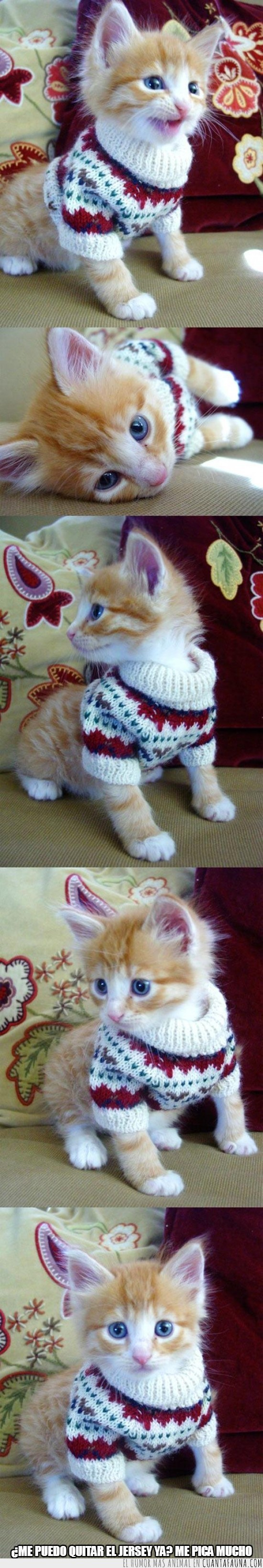 gato,jersey de lana,regalado