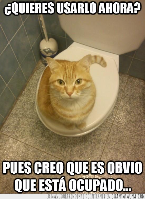 baño,gato,humano,listo,naranja,ocupado