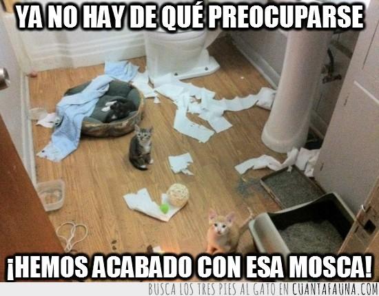 destrozar,gatos,lavabo,mosca,papel de vater,wc