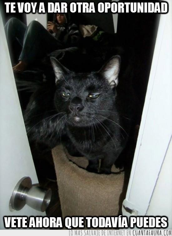 Gato,Guardian,Habitación,Oportunidad,Portero,Puerta