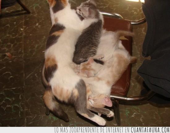Bebés,espacio,Fantasmita,Gatitos,gatos,Kyon,madre,Miky,Pancho,sillas