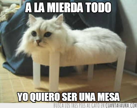 blanco,gato,mesa,patas de madera