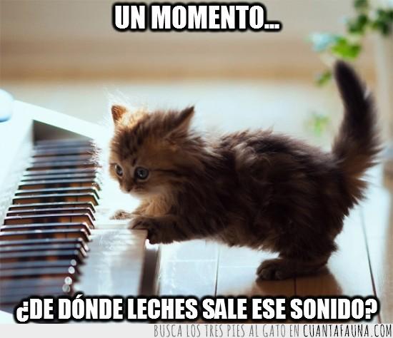 expresion,gatito,piano,tocando piano,tocar