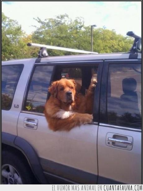 coche,direccion,disculpe,parque,perro,preguntar