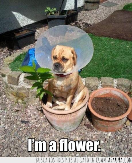 flor,flower,jardín,perro