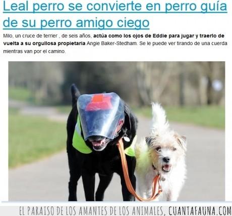 amigo,ayuda,ciego,guia,ojo,perro