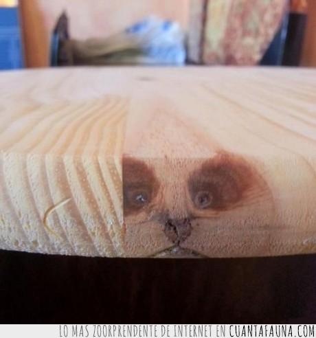 aserradero,corte,felino,gato,imagen,madera